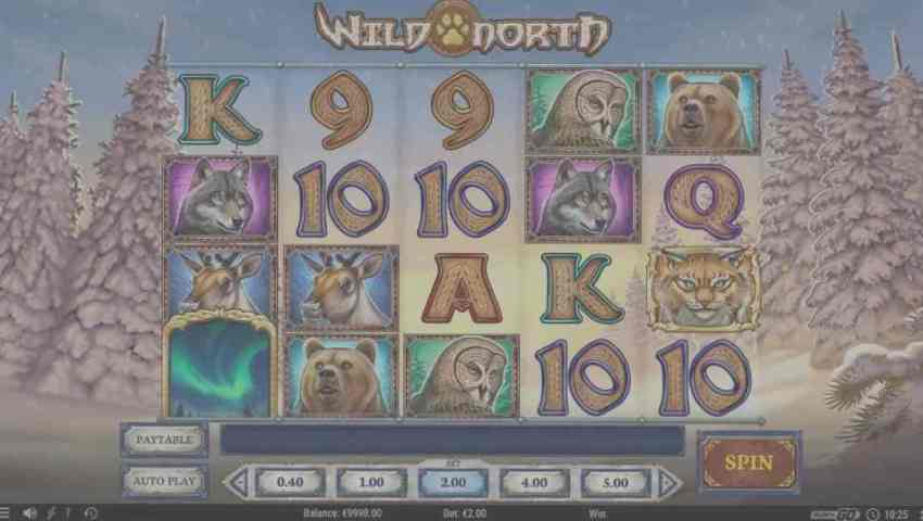 wild north gratis ecran